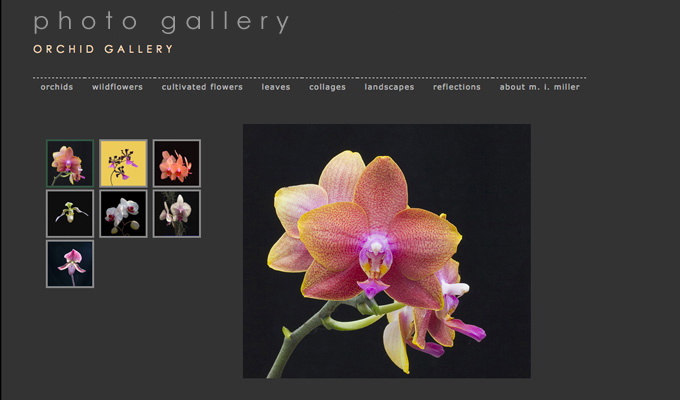 Margaret Miller Photography website